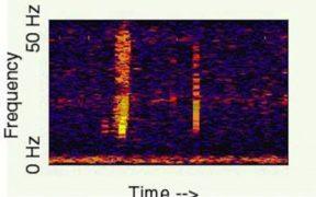 Spectrogram of Bloop.