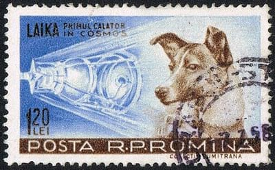 Laika in stamp