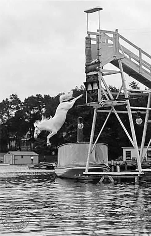 Diving Horse: The horses were trained to dive three to four times on performance days.