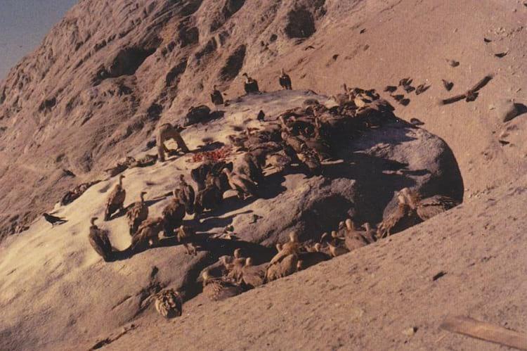 Sky Burial: Vultures feeding on the deceased.