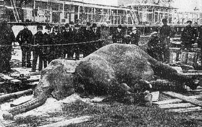 Topsy the elephant dead