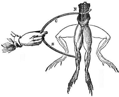 Luigi Galvani's experiment on stimulation of muscle