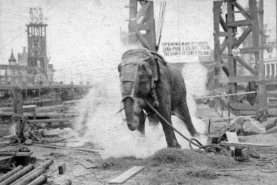 Topsy the elephant being electrocuted