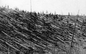 Aftermath of the Tunguska event.