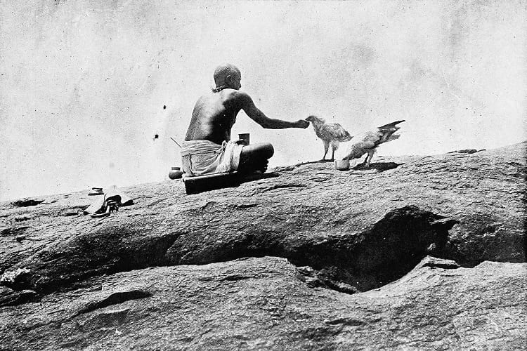A priest feasting the sacred Egyptian Vultures near Vedagiriswarar temple.