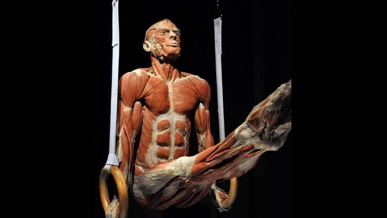 https://www.ststworld.com/wp-content/uploads/2019/01/Body_Worlds_Exhibits-1280x720.jpg