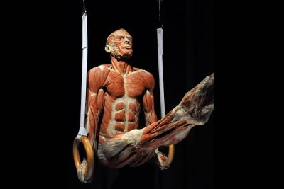 A gymnast at Body Worlds exhibition