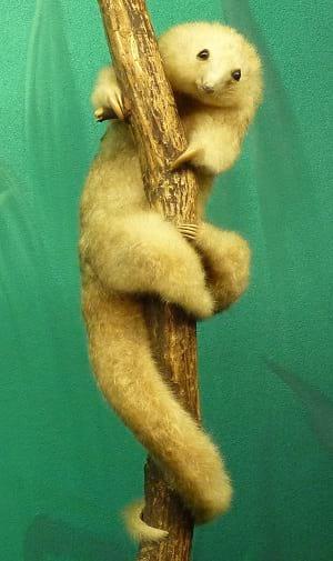 A stuffed silky anteater