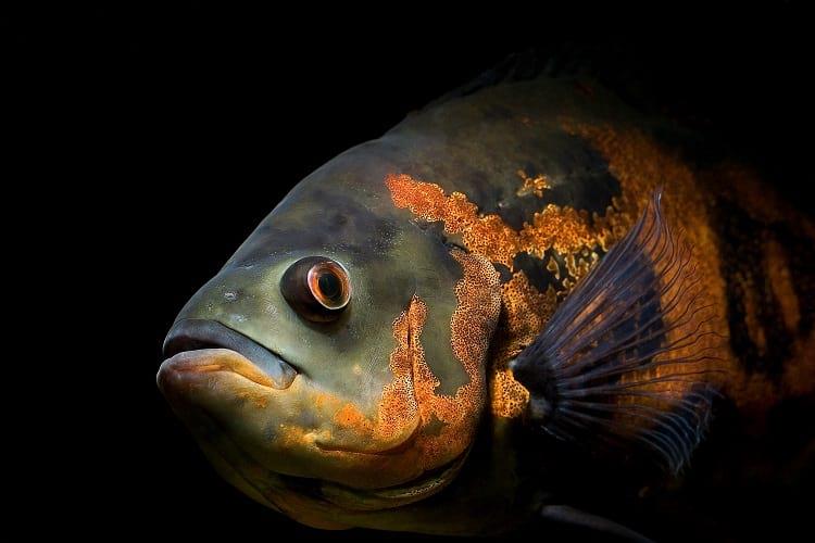 Do fishes sleep