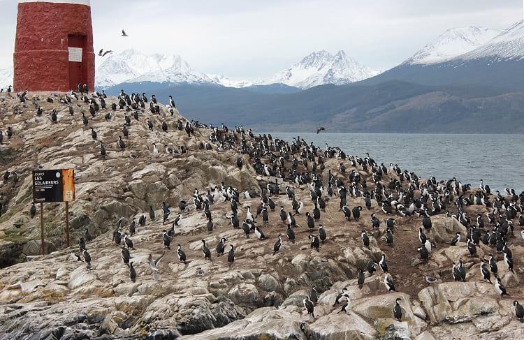 Penguins of Ushuaia.