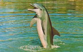Kathy the dolphin.