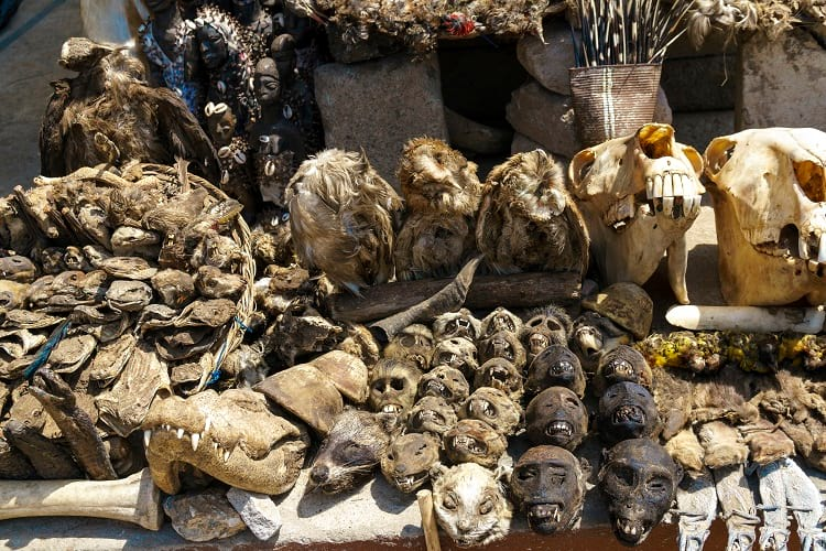 Akodessawa Fetish Market animal skulls.