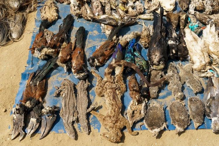 Many types of birds, reptiles and mammals can be found in Akodessawa Fetish Market.