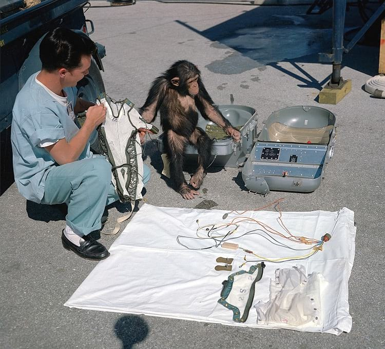 A technician displaying all the equipment of Ham the Astrochimp