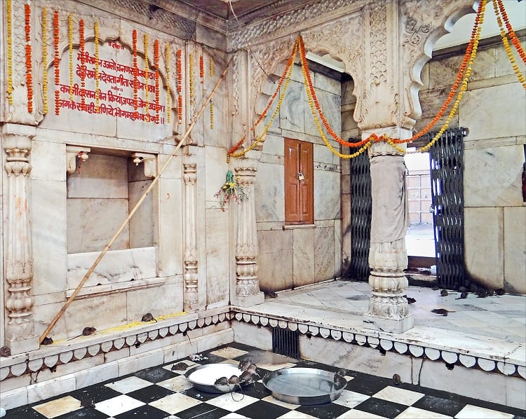 Inside the Karni Mata Temple..