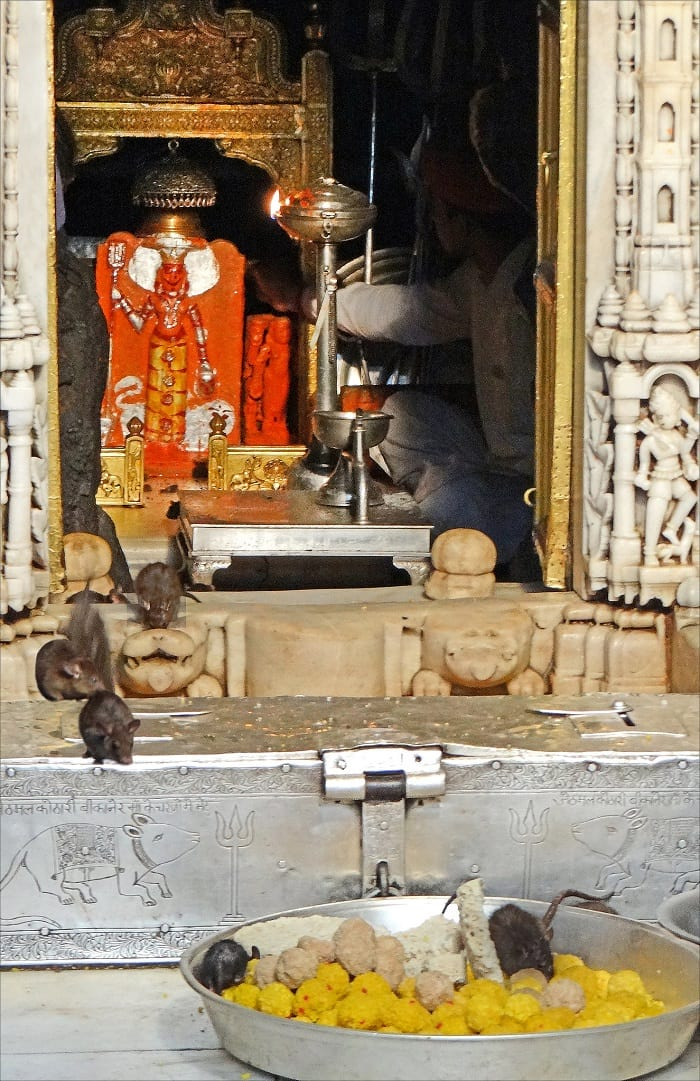 The statue of Karni Mata inside the temple.