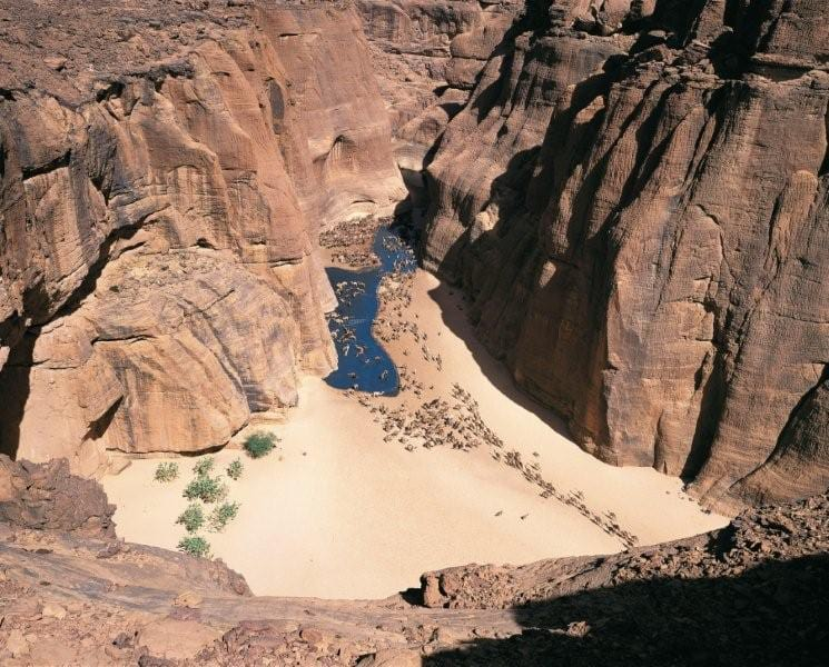 Camels arriving at a waterhole in Ennedi.