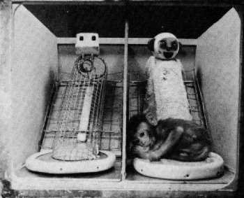 Wire and cloth mother surrogates for Rhesus monkey.