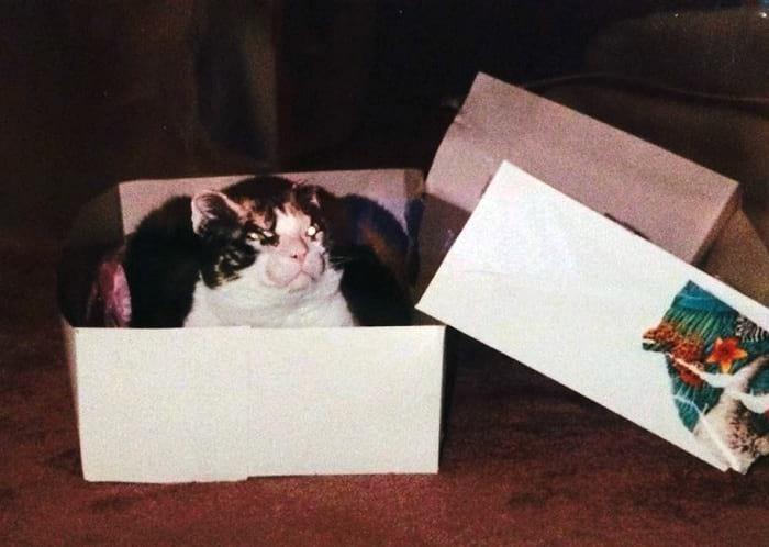 Scarlette resting in a box.