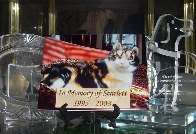 A photo In memory of Scarlett.
