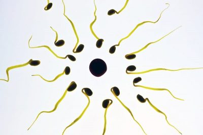 Illustration of a human sperm cell.